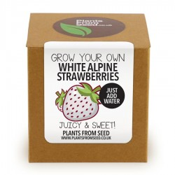 Kit orto semi fragole bianche strawberry grow plant